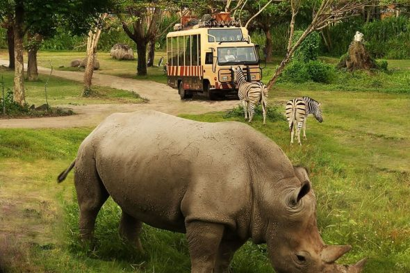 Bali Safari & Marine Park - Best Tourist Attractions in Bali