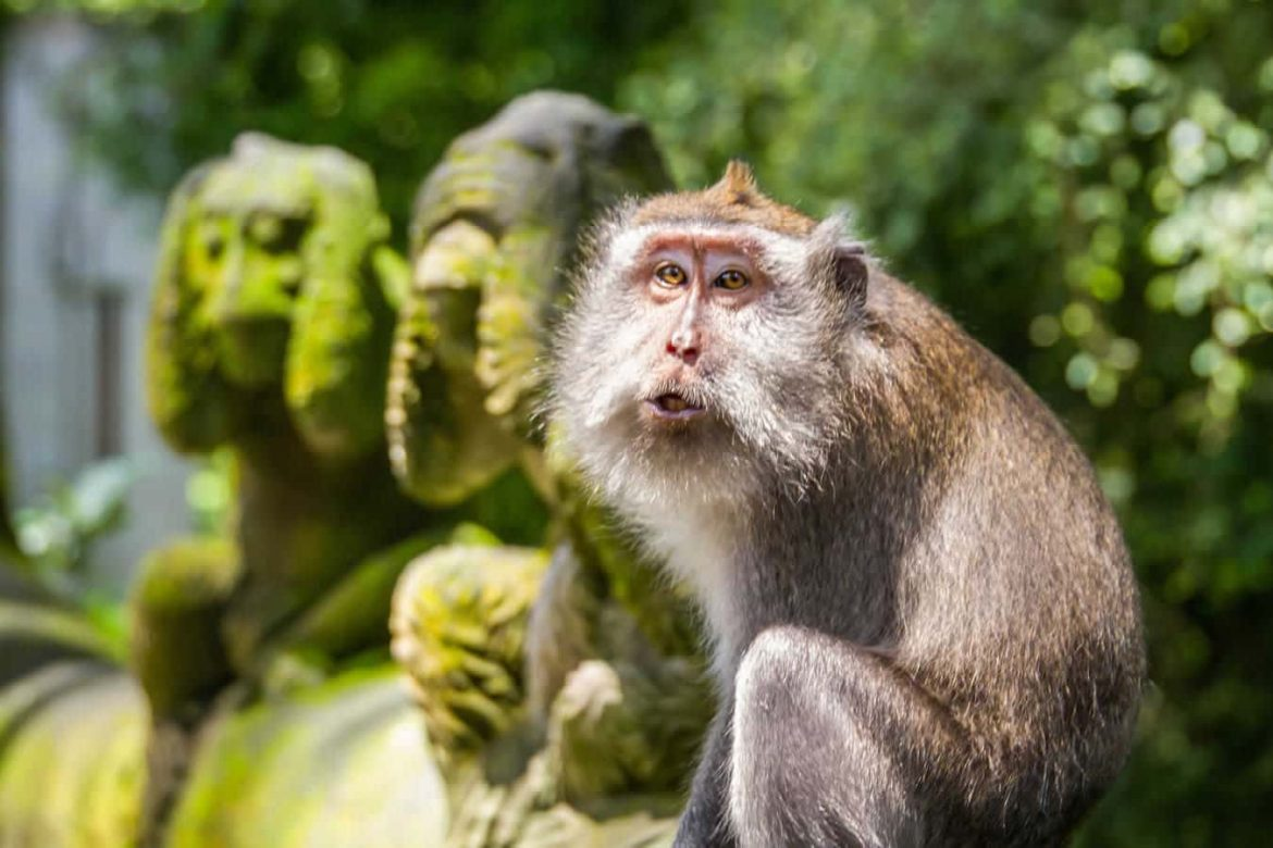 Ubud Monkey Forest - Bali Holiday Secrets