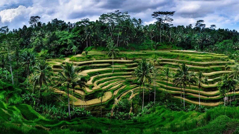 Tegalalang Rice Terraces - Bali Holiday Secrets