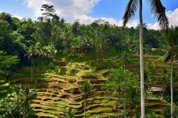 Tegalalang Rice Terraces - Best Tourist Attractions in Bali