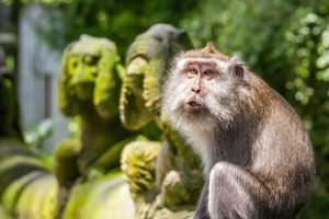 Ubud Monkey Forest - Best Tourist Attractions in Bali