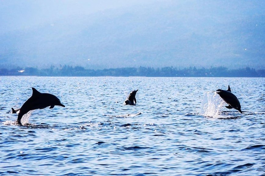 Dolphins at Lovina - Bali Holiday Secrets